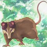 Playful Possum